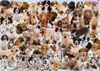 dogs-galore,Dogs Galore Ravensburger Jigsaw Puzzle 1000 Pieces # 156306 made by Ravensberger Germany Games & Puz