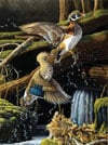 beautiful birds of the USA leaving the pond ravensburger 1000 piece jigsaw puzzel # 157068