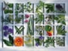 kitchen-herbs,Jigsaw Puzzle 1500 pieces kitchen herbs by Christel Rosenfeld  manufactured by Ravensburger # 163724