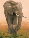 elephant-mother-protecting-baby,Ravesburger JigsawPuzzle 1500 pieces elephant mother protecting her baby 163960