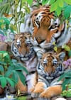 Tiger Family painted by Howard Robinson, 1000 piece jigsaw puzzle made by Ravensburger Puzzle