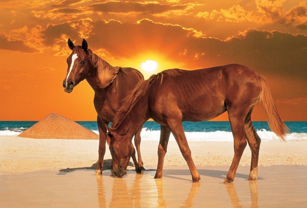 trefl jigsaw puzzles, stallions on the beach, 1000 pieces, trefl stallions-on-the-beach