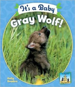 It's a Baby Gray Wolf! book written by Kelly Doudna