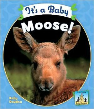 It's a Baby Moose! book written by Kelly Doudna