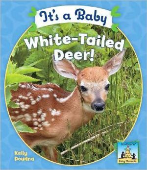 It's a Baby White-Tailed Deer! book written by Kelly Doudna