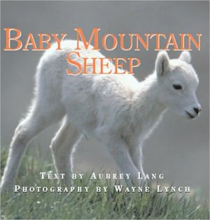 Baby Mountain Sheep book written by Aubrey Lang
