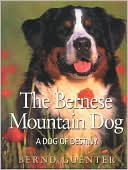 The Bernese Mountain Dog: A Dog of Destiny book written by Bernd Guenter