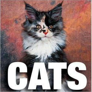 Cats book written by Valeria Manferto De Fabianis