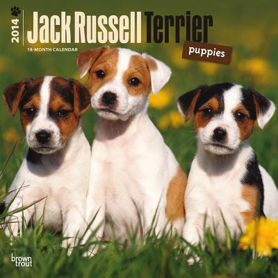 Jack Russell Terrier Puppies 2014 Calendar 18-Month book written by Browntrout Publishers
