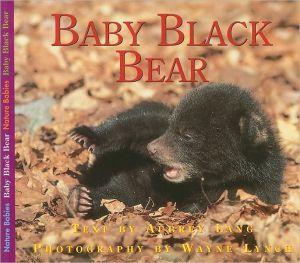 Baby Black Bear book written by Aubrey Lang