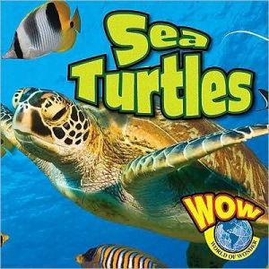 Sea Turtle book written by Jill Foran