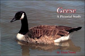 Geese: A Pictorial Study book written by Trica Veasey