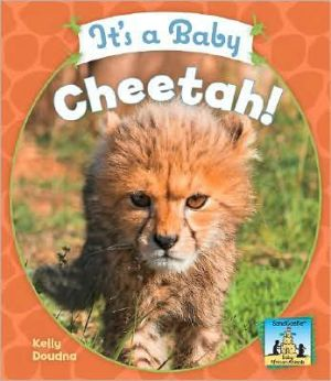 It's a Baby Cheetah! book written by Kelly Doudna