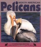 Pelicans book written by Lynn M. Stone