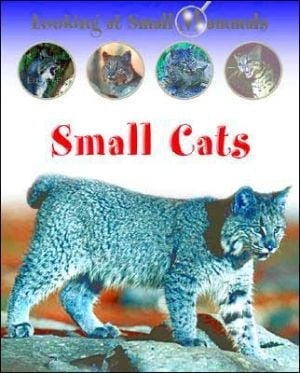 Small Cats book written by Sally Morgan