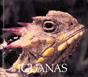 Iguanas book written by Don Patton