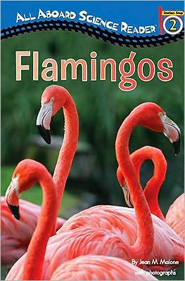 Flamingos book written by Jean M. Malone