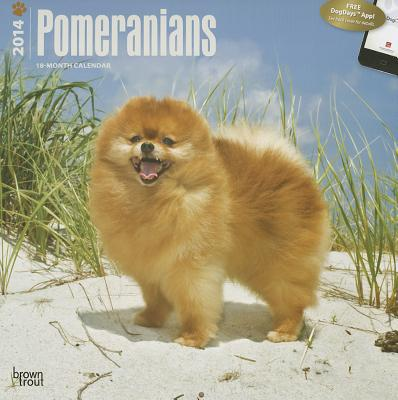 Pomeranians 2014 Calendar book written by Browntrout Publishers