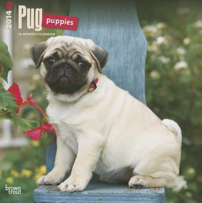 Pug Puppies 2014 18-Month Calendar book written by Browntrout Publishers