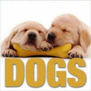 Dogs (MiniCube) book written by Vito Buono