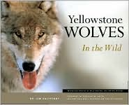 Yellowstone Wolves in the Wild book written by James C. Halfpenny