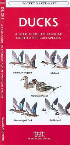 Ducks: A Field Guide to Familiar North American Species book written by James Kavanagh