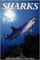 Sharks book written by Sheena Coupe