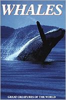 Whales book written by Lesley Dow