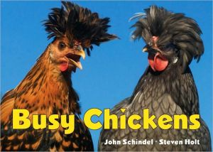 Busy Chickens book written by John Schindel