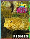 Extremely Weird Fishes book written by Sarah Lovett