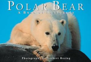 Polar Bear: A Book of Postcards book written by Norbert Rosing