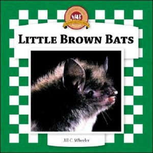 Little Brown Bats book written by Jill Wheeler