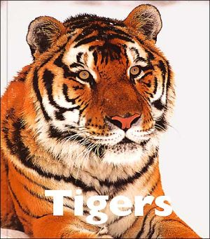 Tigers book written by Jenny Markert