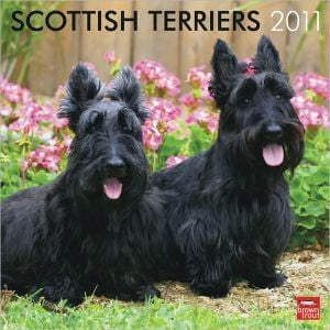 2011 Scottish Terriers Square Wall Calendar book written by BrownTrout Publishers