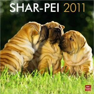 2011 Shar-Pei Square Wall Calendar book written by BrownTrout Publishers