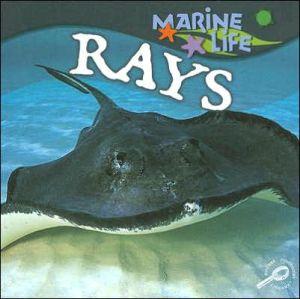Rays book written by Lynn M. Stone
