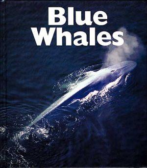 Blue Whales book written by Mary Ann McDonald