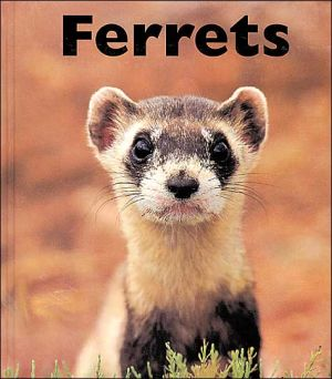 Ferrets book written by Mary Berendes