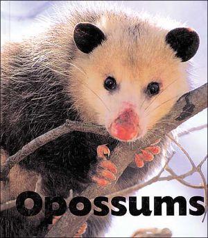 Opossums book written by Sandra Lee