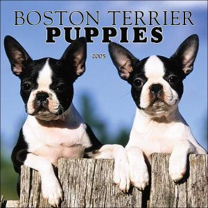 Boston Terrier Puppies 2005 Calendar written by Not Available