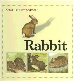 Rabbit book written by Ting Morris