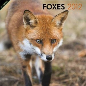 2012 Foxes Square 12X12 Wall Calendar book written by BrownTrout Publishers