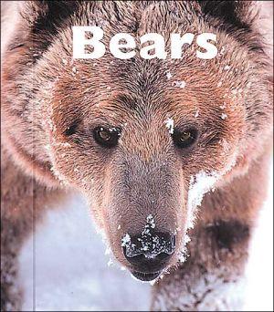 Bears book written by Patrick Merrick
