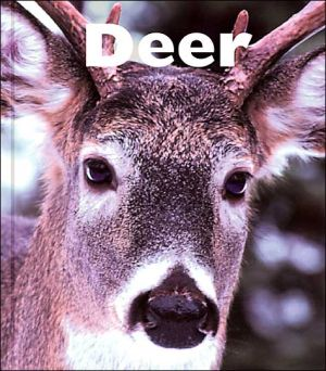Deer book written by Mary Berendes
