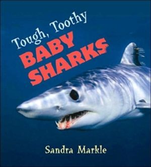 Tough, Toothy Baby Sharks written by Sandra Markle