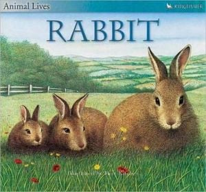 Animal Lives: Rabbit book written by Sally Tagholm