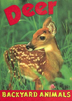 Deer book written by Lauren Diemer