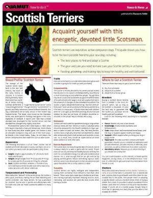 Scottish Terrier (Quamut) book written by Quamut