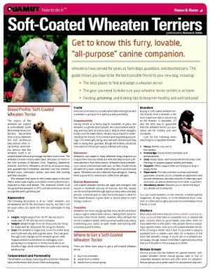 Soft Coated Wheaten Terrier (Quamut) book written by Quamut