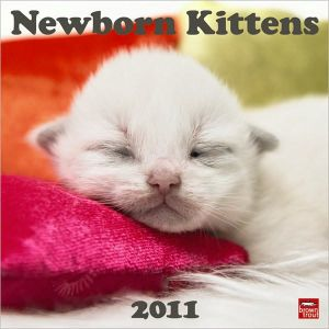 2011 Newborn Kittens Square Wall Calendar book written by BrownTrout Publishers